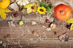 秋天静物画用南瓜和向日葵 库存照片