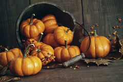 秋天静物画用在桶的小南瓜 免版税库存照片