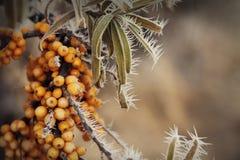 秋天静物画被编织的盖帽礼物叶子和干莓果 免版税库存图片