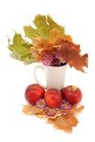 秋天静物画,苹果,叶子,在白色bac的菊花 库存照片