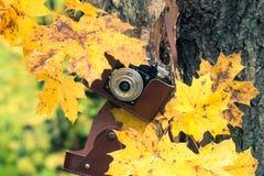 秋天音乐会,在autum背景的减速火箭的照相机 免版税库存图片