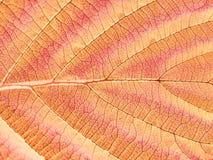 秋天页结构树 免版税库存图片