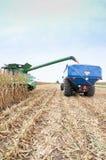 秋天领域玉米收获 免版税库存图片