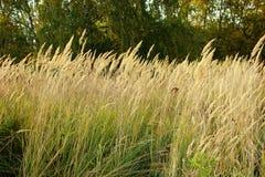秋天领域,长满的草草本植物 免版税图库摄影
