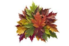 秋天颜色下跌叶子槭树混合的花圈 免版税图库摄影