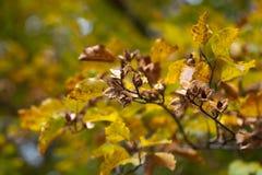 秋天颜色印象  库存照片