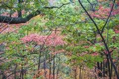 秋天颜色厚实的森林叶子在桃红色,桔子和绿色的 免版税库存照片