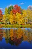 秋天颜色反射 免版税图库摄影