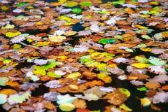 秋天颜色变动是与红色的季节,黄色,并且在水的绿色叶子代替浮出水面 免版税库存照片