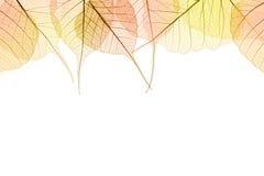 秋天颜色叶子边界在白色isilated 免版税库存照片