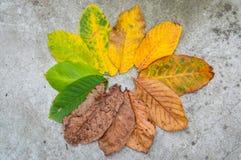 秋天颜色叶子 库存照片