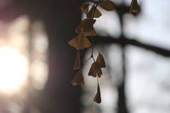 秋天颜色和光 免版税图库摄影
