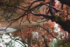 秋天颜色和反射自然墙纸  免版税库存照片