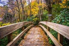 秋天颜色和桥梁在Tanawha沿被赶走的蓝色落后, 库存图片