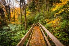 秋天颜色和桥梁在Tanawha沿被赶走的蓝色落后, 免版税库存照片