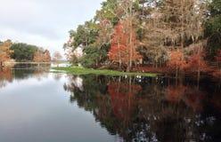 秋天颜色在一个冬日 库存照片