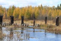 秋天颜色在一条河被反射在威斯康辛 免版税库存图片