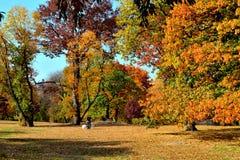 秋天颜色在中央公园 免版税库存照片
