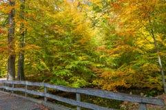 秋天颜色在丹麦森林里 免版税库存图片