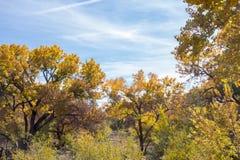 秋天颜色在亚伯科基新墨西哥 库存图片
