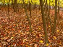 秋天颜色在伊利诺伊 库存照片