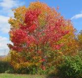 秋天颜色在佛蒙特 图库摄影
