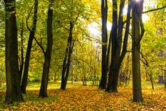 秋天颜色在公园 免版税库存图片