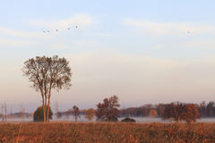 秋天颜色在加拿大 免版税库存图片