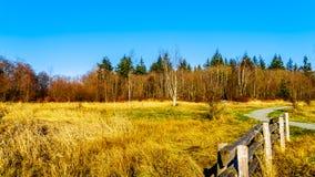 秋天颜色在坎伯谷地方公园在Langley,不列颠哥伦比亚省乡  免版税库存图片