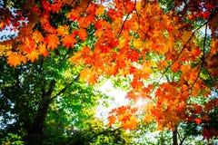 秋天颜色在天空下 库存图片