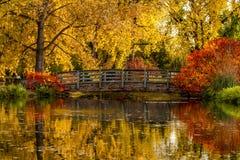 秋天颜色在室外公园 免版税库存图片
