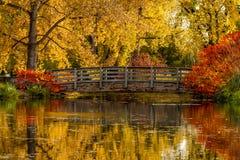 秋天颜色在室外公园 库存照片