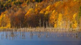 秋天颜色在山湖附近的一个森林里 库存图片