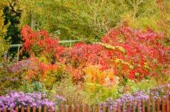 秋天颜色在庭院里 免版税库存图片