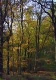 秋天颜色在教务长森林里  免版税图库摄影