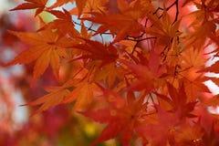 秋天颜色在日光,日本 免版税库存照片