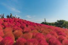 秋天颜色在日立海滨公园,茨城,日本 库存图片