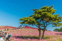 秋天颜色在日立海滨公园,茨城,日本 免版税库存图片