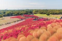 秋天颜色在日立海滨公园,茨城,日本 免版税库存照片