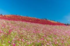 秋天颜色在日立海滨公园,茨城,日本 库存照片
