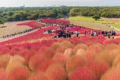 秋天颜色在日立海滨公园,茨城,日本 图库摄影