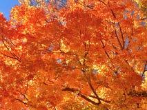 秋天颜色在普莱西德湖城,纽约 免版税库存照片