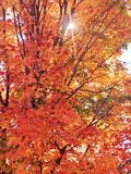 秋天颜色在普莱西德湖城,纽约 免版税库存图片