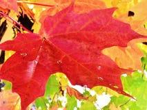 秋天颜色在普莱西德湖城,纽约 库存照片