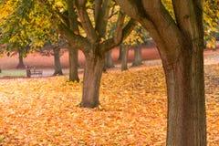 秋天颜色在有叶子的一个公园在地面上 免版税库存图片