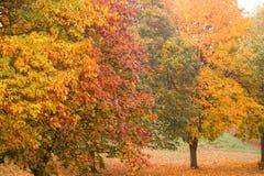 秋天颜色在有叶子的一个公园在地面上 库存照片
