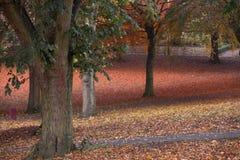 秋天颜色在有叶子的一个公园在地面上 免版税库存照片