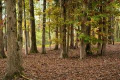 秋天颜色在森林里 免版税库存图片