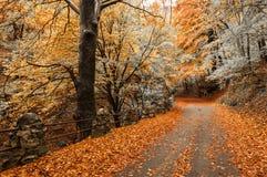 秋天颜色在森林里 免版税库存照片