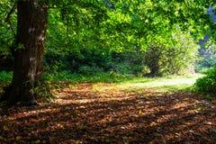 秋天颜色在森林 免版税库存照片